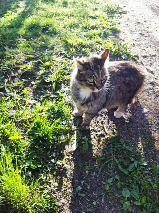 Красивый бывшедомашний котик пропадает.. Нужна хотя бы временная передержка!