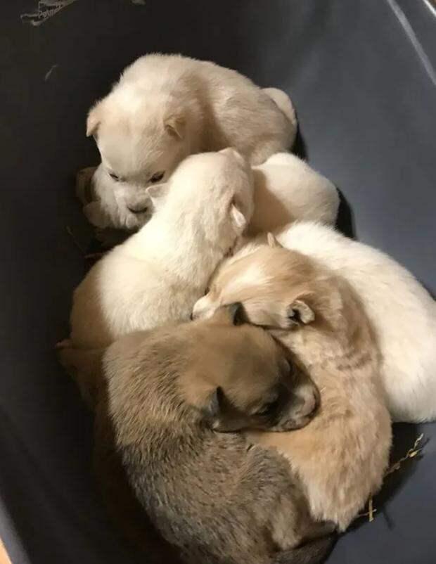 Собака 3 недели пролежала в снегу с щенятами — пока не пришли люди