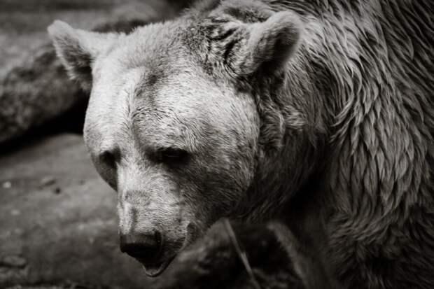 Охота в Тункинском крае. Часть шестая