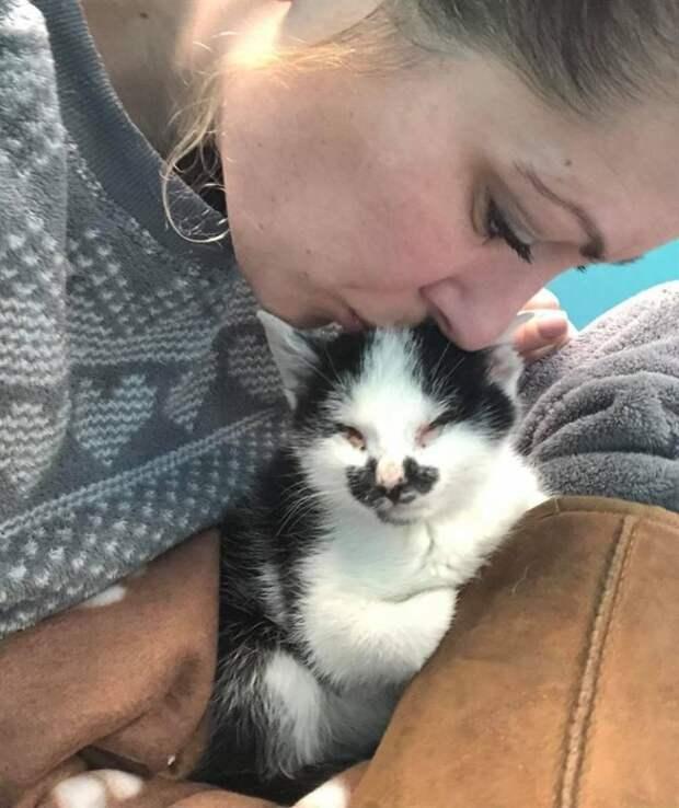 Женщина случайно услышала крик слепого котёнка в приюте и не смогла уйти оттуда без него