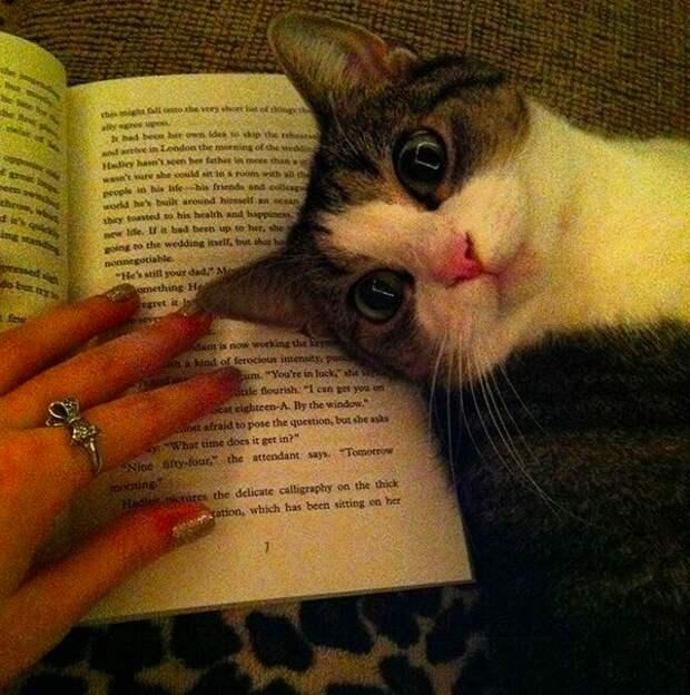 3. Для того, чтобы с таким милым видом развалиться прямо на книге нужны или годы тренировок, или врожденный талант домашний питомец, животные, кот, милота, юмор