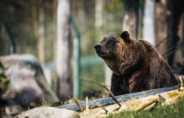 Лучшие учителя Удмуртии, экологический транспорт в Канаде и дикий медведь в Сочи: что произошло минувшей ночью