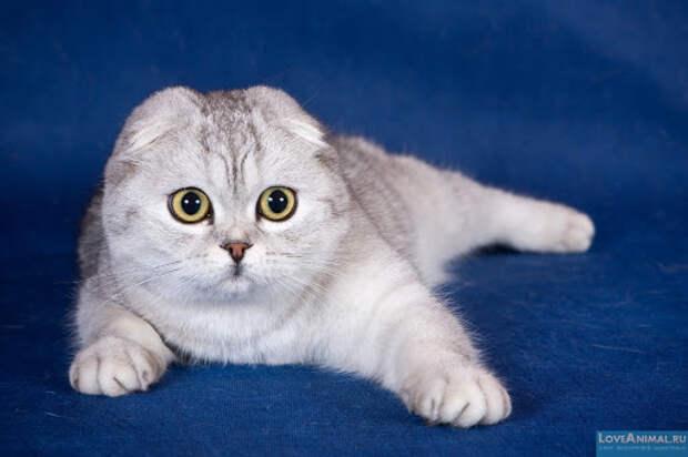 Война, мир и любовь кошки Василисы