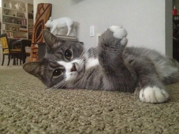 Примерные темы кошачьих форумов животные, кошачий форум, кошки, юмор