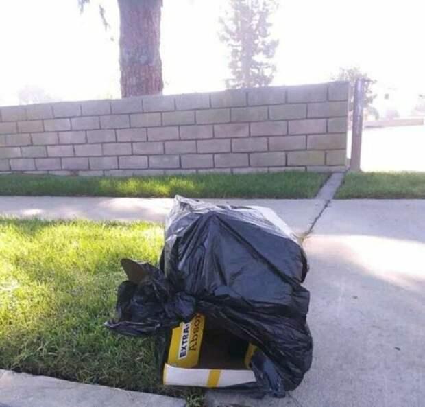 Хозяин выбросил коробку с пакетом, а внутри бился щенок