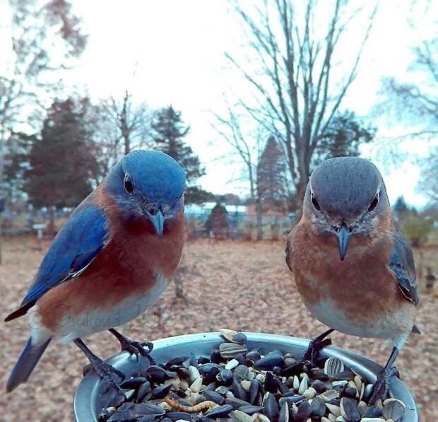 Камера на птичьей кормушке помогла подловить пернатых в самые неожиданные моменты