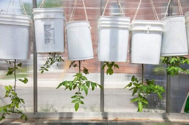 Как вырастить овощи в домашних условиях, чтобы они были не хуже дачных