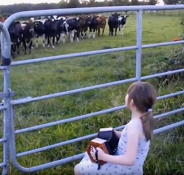Юная заклинательница коров