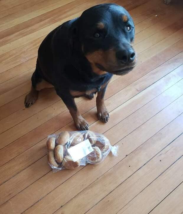 Во время отсутствия хозяев собака приступает к охране самого важного в доме