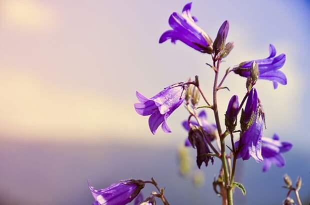 Какие цветы не боятся солнца и засухи?