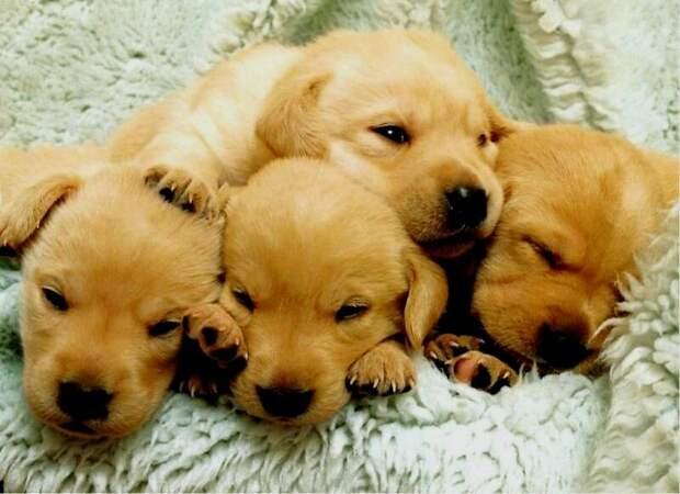 Спасение маленьких щенков отвело от семьи беду