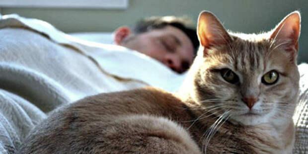 Совместный сон с котиком: почему не пускать питомца к себе в постель – маленькое преступление