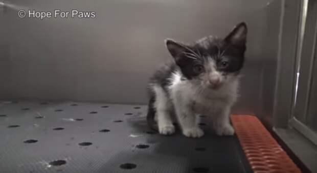 «Время истекало… И мы разрушили камин!» Котёнок 3 дня провисел в дымоходе, но выжил и нашёл брата