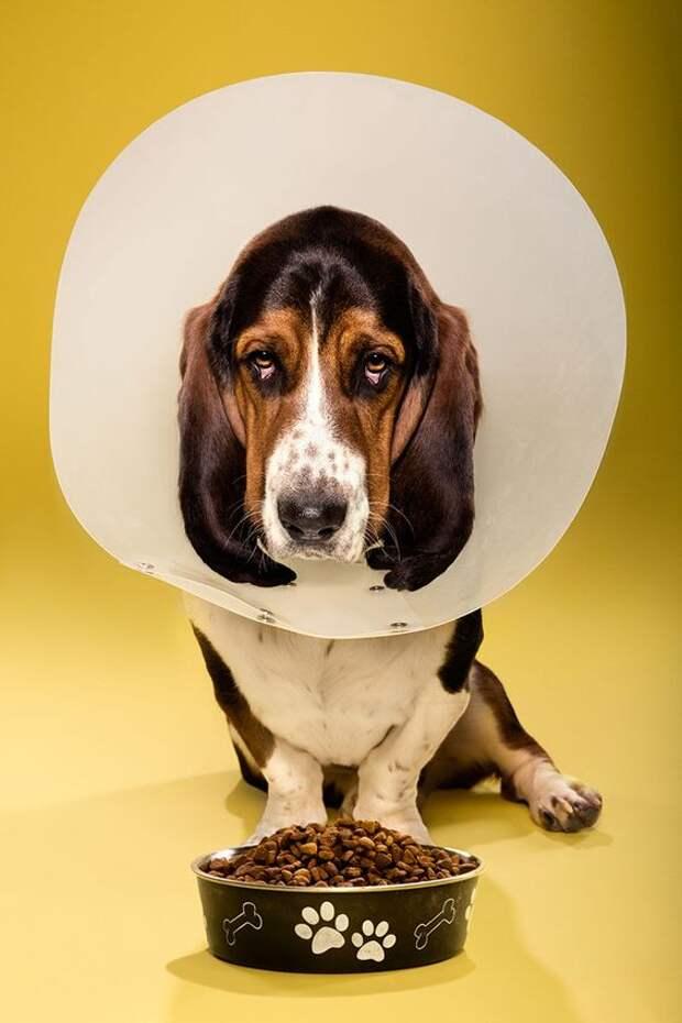 Собака не ест: причины и возможные болезни