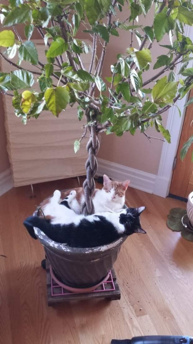 Смешные и забавные кошки