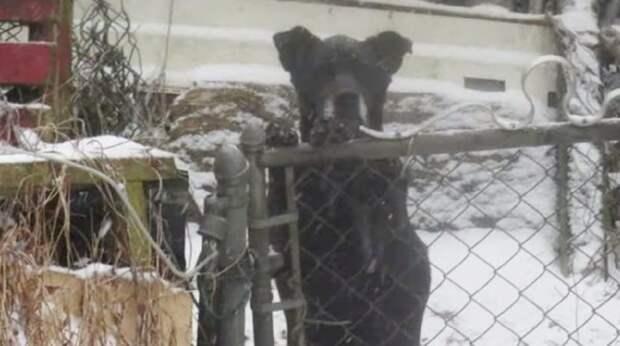 Старенькая собачка томилась в грязном вольере, мучаясь то от снега, то от жары