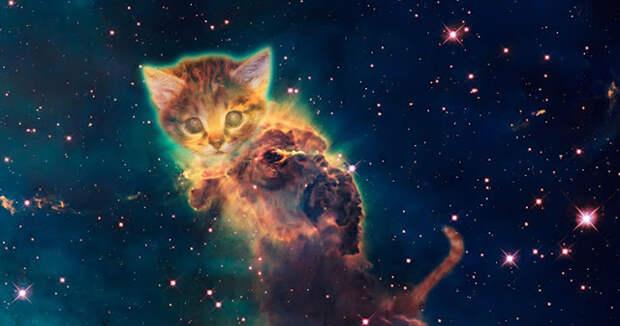 Ваша кошка не просто домашнее животное, между вами может быть духовная связь