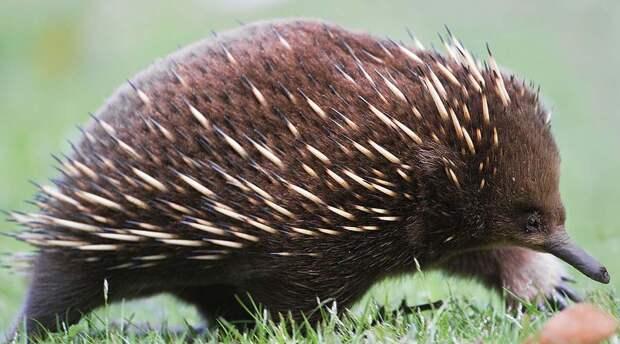 10 животных, которые своим видом противоречат эволюции