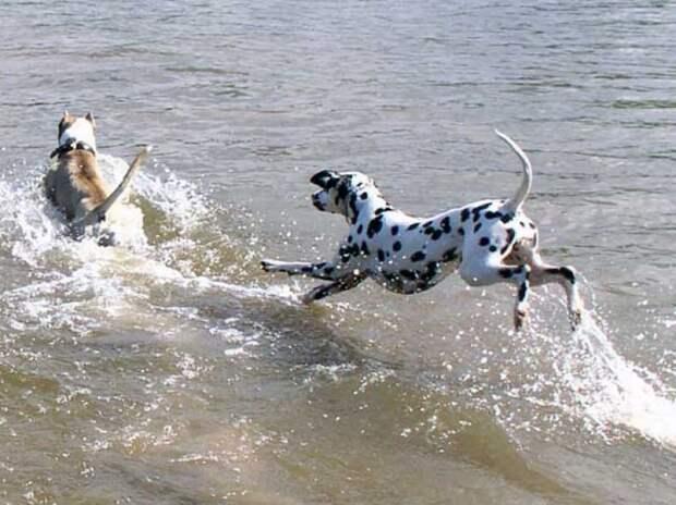 Невыдуманные истории собак-героев