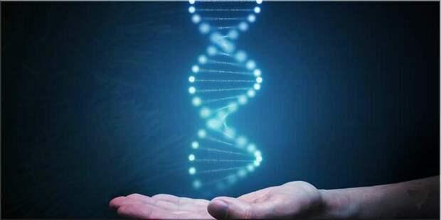 Что такое генетическая память и как ее использовать