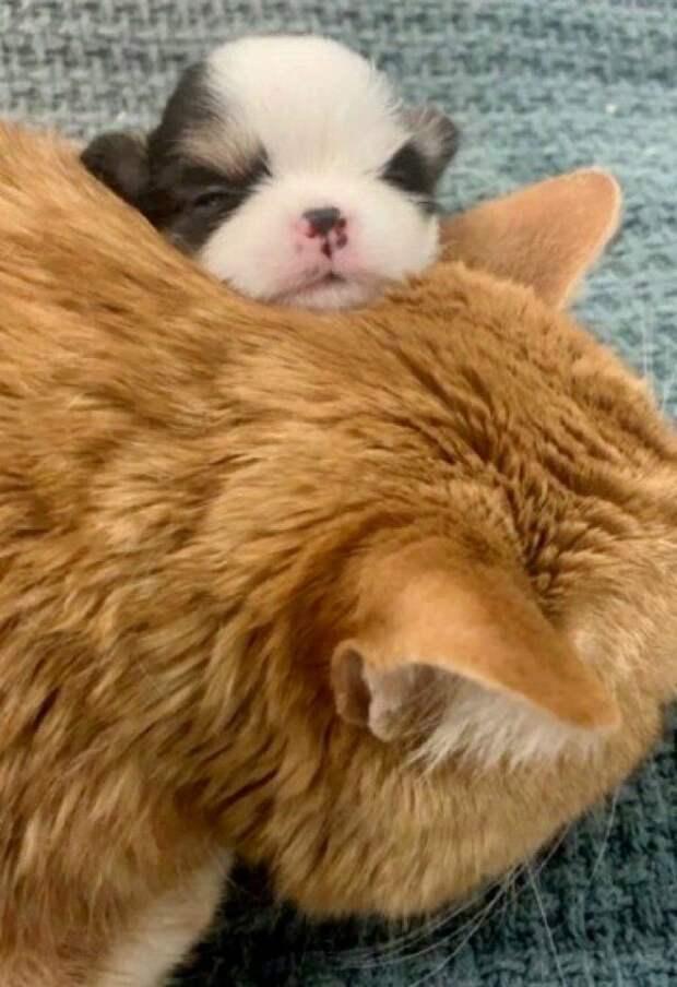 Кот с добрейшей душой ухаживает за спасенными животными истории спасения, кот, коты, кошки, мило, фото