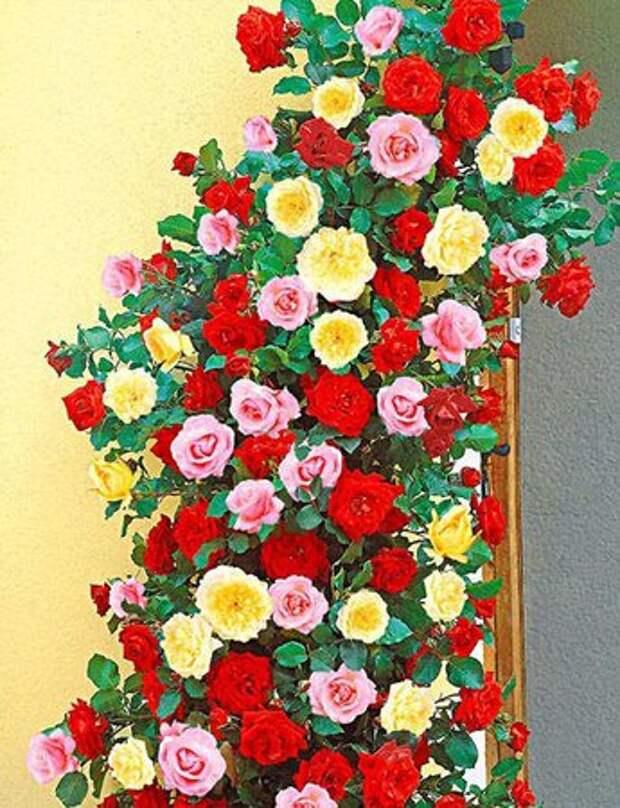 Врсар — небольшая цветная жемчужина Адриатики