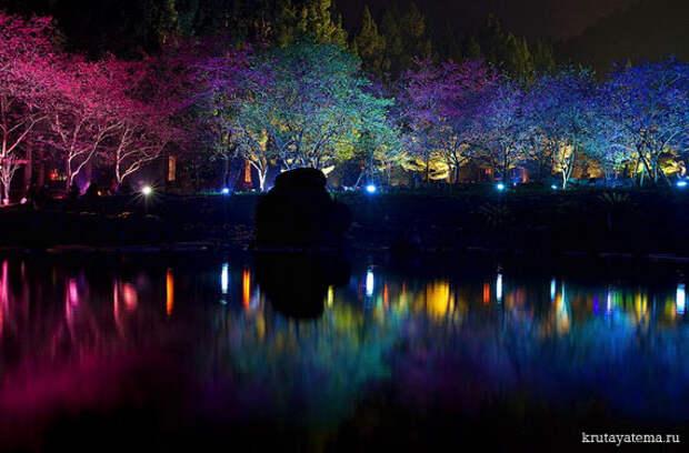 Фестиваль Cherry Blossom
