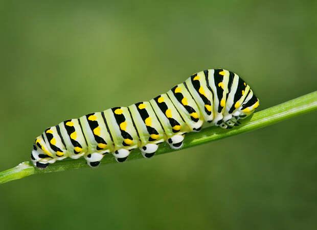 caterpillar-moth-butterfly-before-after-metamorphosis-5-1
