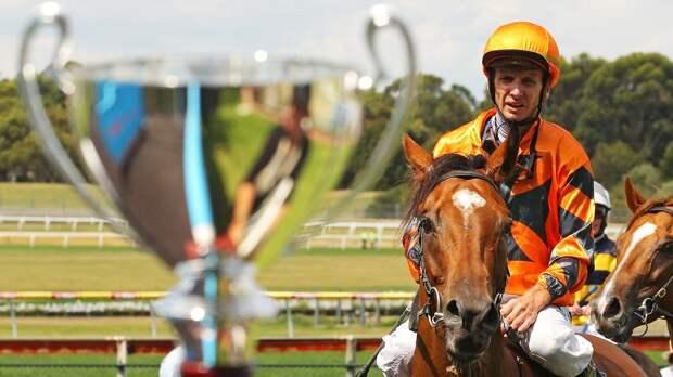 Как привести скакуна кпобеде: выбор лошади, тренировки, правильный отбор соревнований