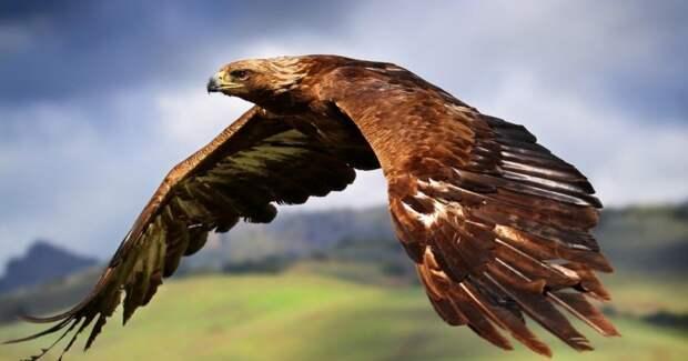 Полет длиною в жизнь: GPS-трекер рассказал о том, где побывал орел за 20 лет