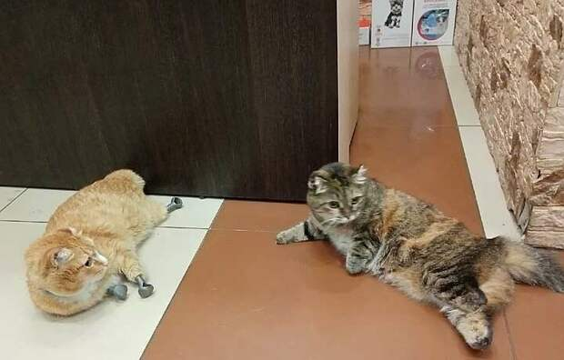 Кошку облили водой на морозе и оставили одну, но она выжила — теперь питомица ждет помощи в приюте