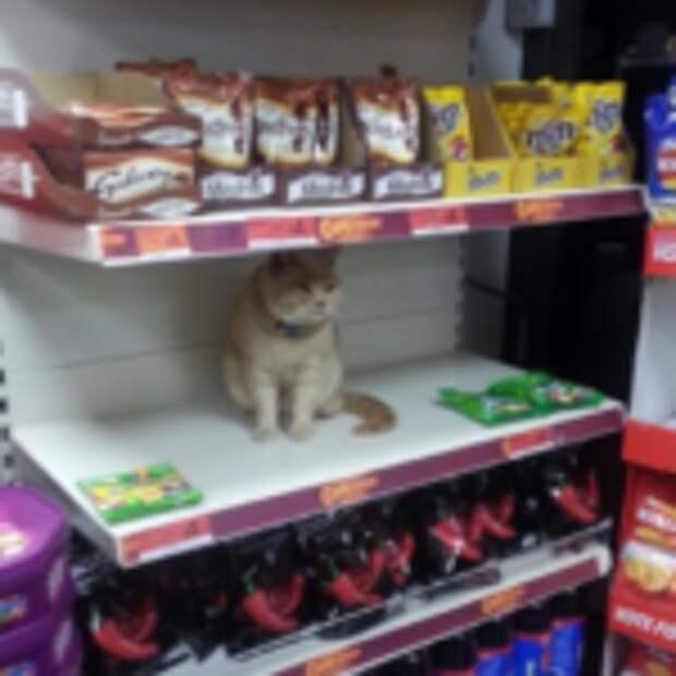 Кот снова появился в магазине