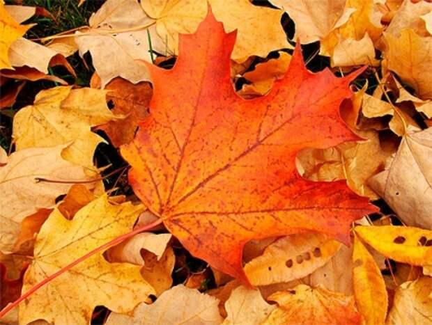 Долгосрочный прогноз погоды на октябрь Дача Аргументы и Факты
