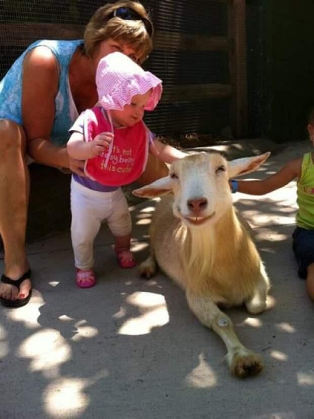 Милые и смешные животные для хорошего настроения