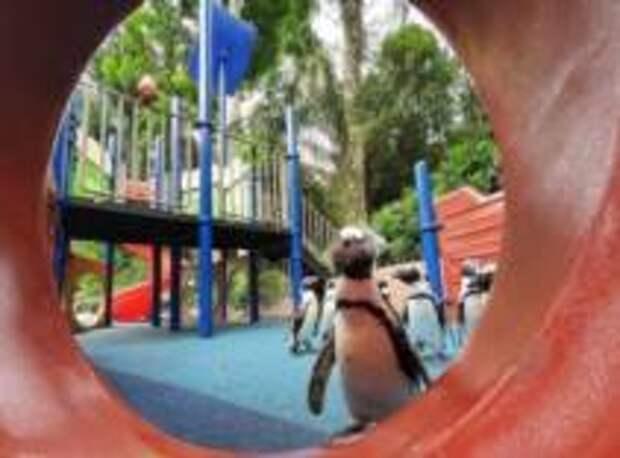 Живая природа и карантин в Сингапуре