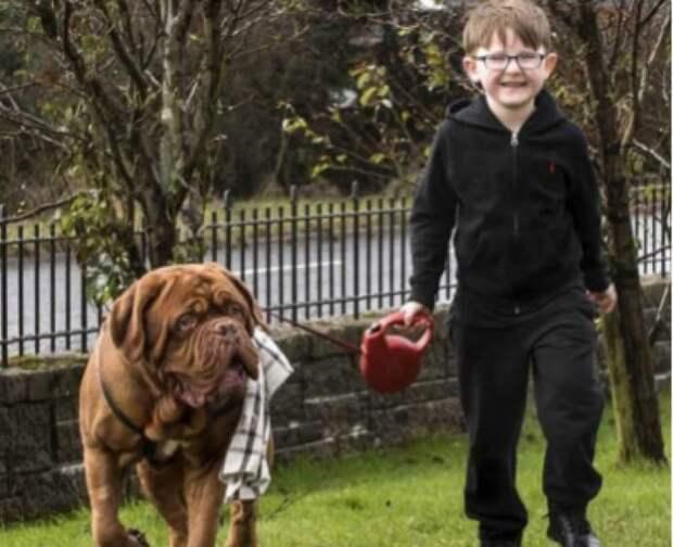 Пёс всегда находился от ребенка с правой стороны. У родителей навернулись слёзы, когда они узнали почему!