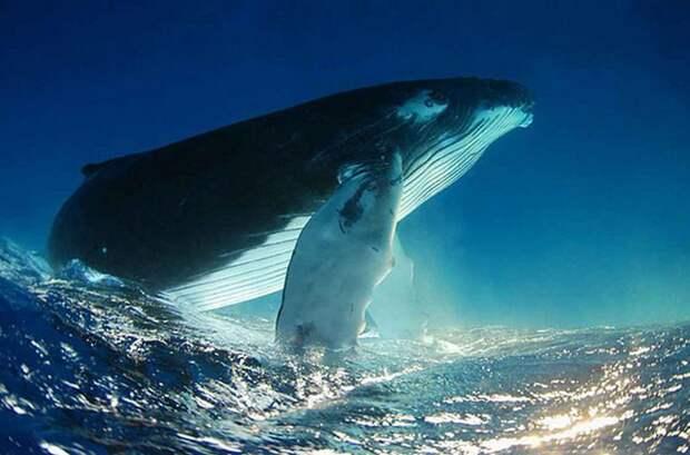 Факты про китов флора, фауна