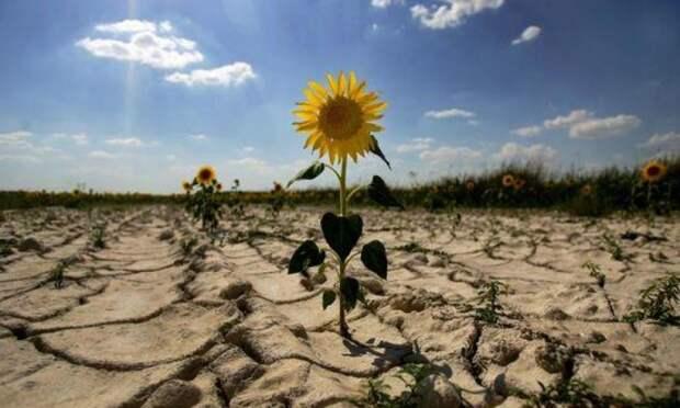 Украина скоро засохнет от своей говнистости – нехватка пресной воды