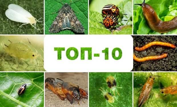 Топ-10 самых прожорливых вредителей огорода