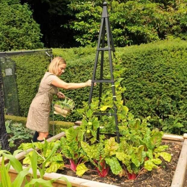 Пирамидальная опора для растений