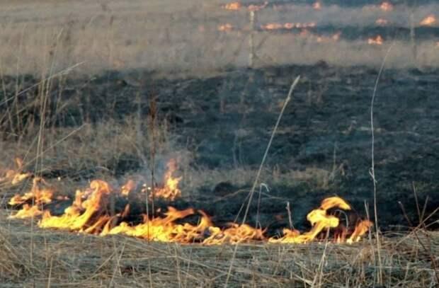 В Тольятти ввели режим ЧС из-за пожара в городском лесничестве — видео - «Инсайдер новостей»