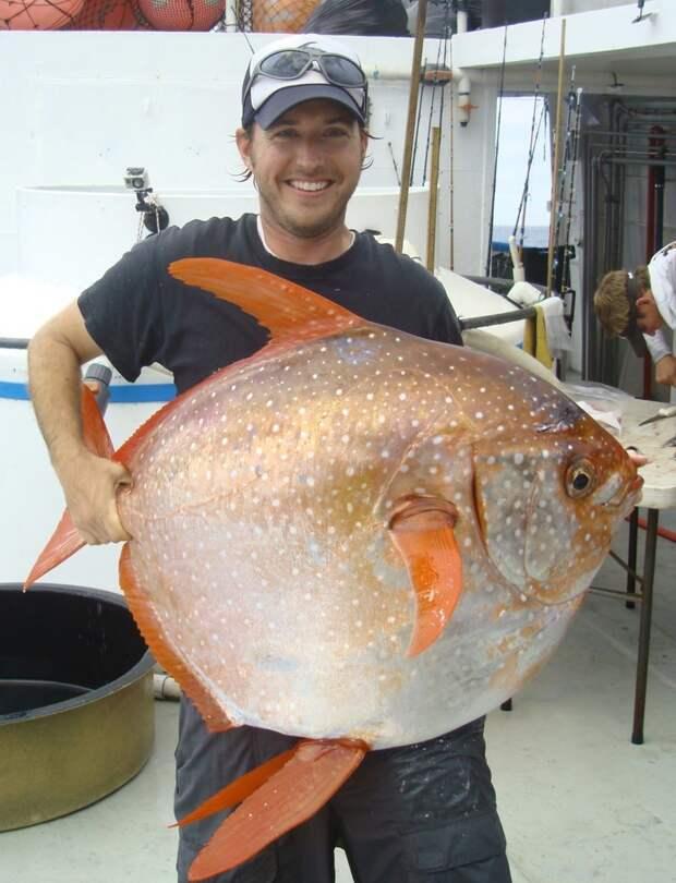 Морской биолог Юго-восточного рыболовного научного центра при Национальной океанической и атмосферной администрации США Ник Вегнер и опах животные, мир, опах, открытие, рыба