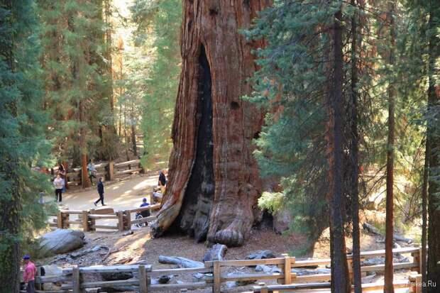 5 самых старых деревьев мира
