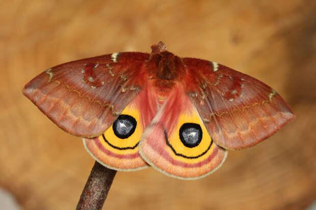 caterpillar-moth-butterfly-before-after-metamorphosis-17-2