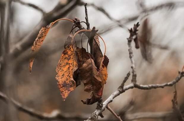 На Шарикоподшипниковской обнаружили засохшее дерево