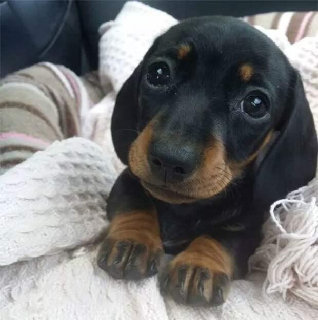 40. Этот взгляд животные, настроение, очарование, подборка, собака, фотография, щенок