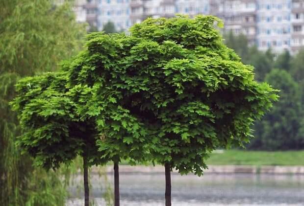 В парке «Ангарские пруды» удалили иву