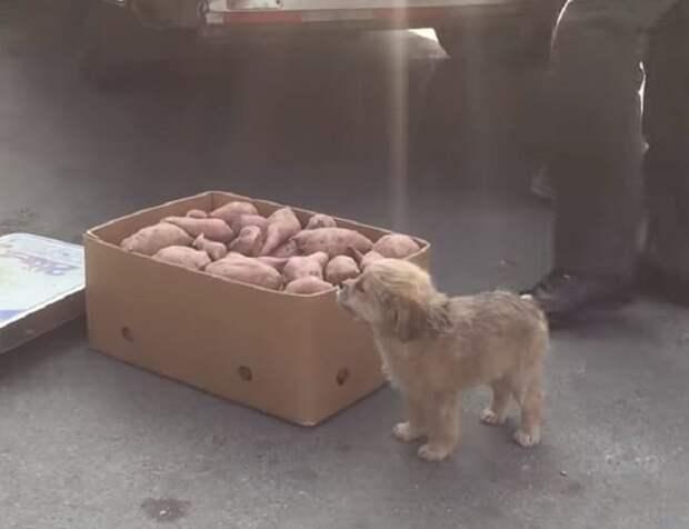 Щенок возле ящика