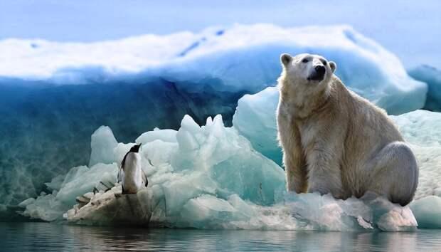 Почему Россия выступает гарантом стабильности в Арктике