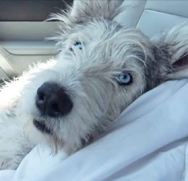 Собачка прихрамывала, глядя на людей. Она верила, что ей обязательно помогут вновь бегать на четырех здоровых лапах